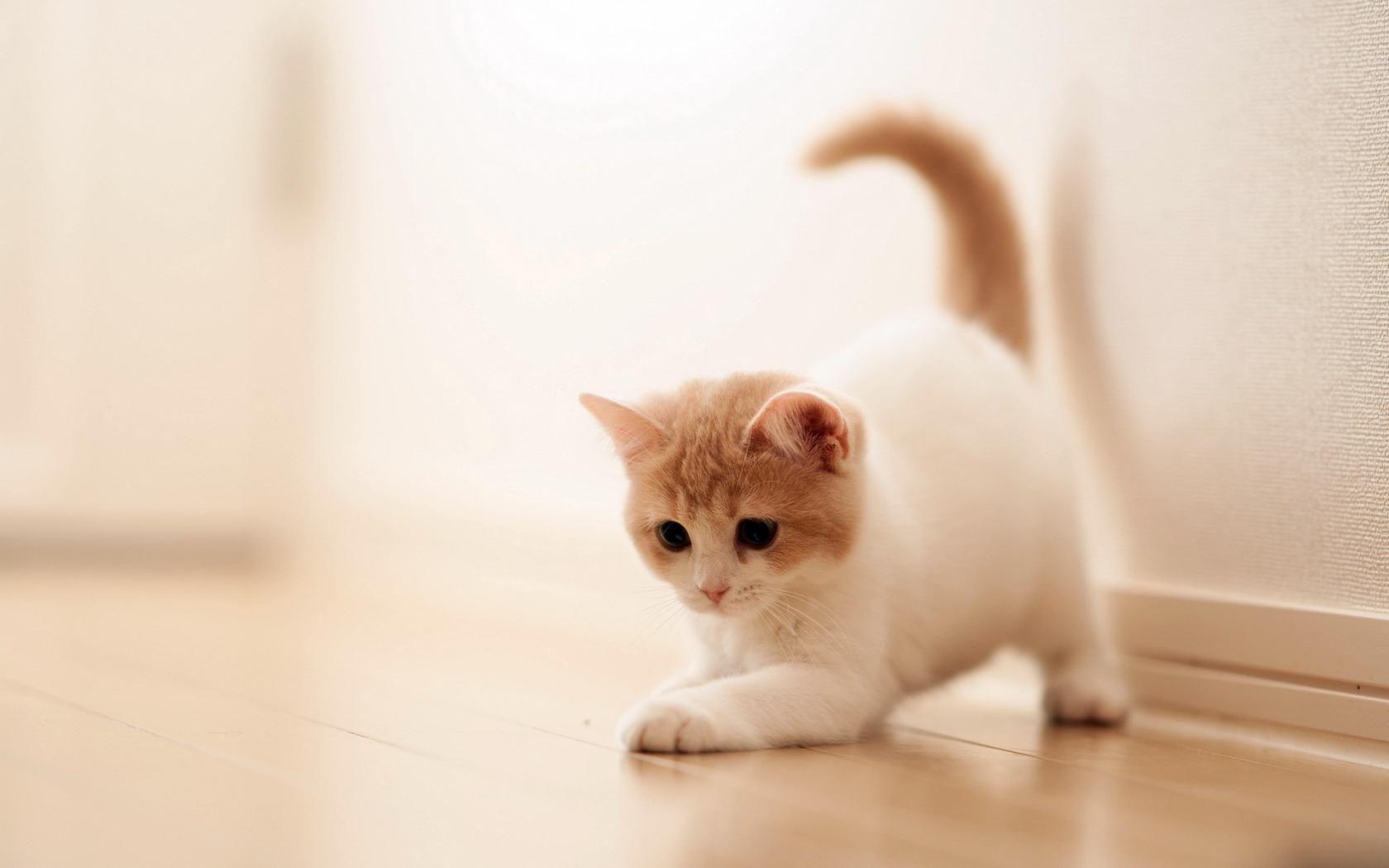 Kedi 4K Resimleri