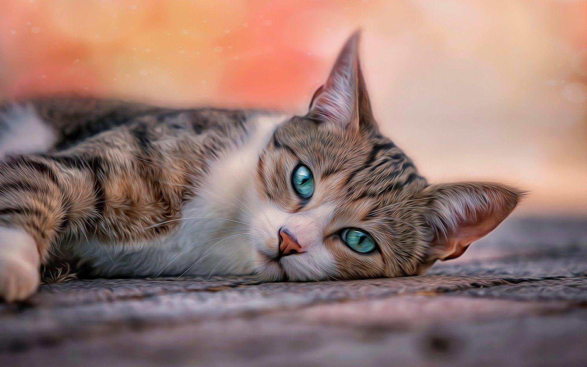 Kedi Ekran Resmi