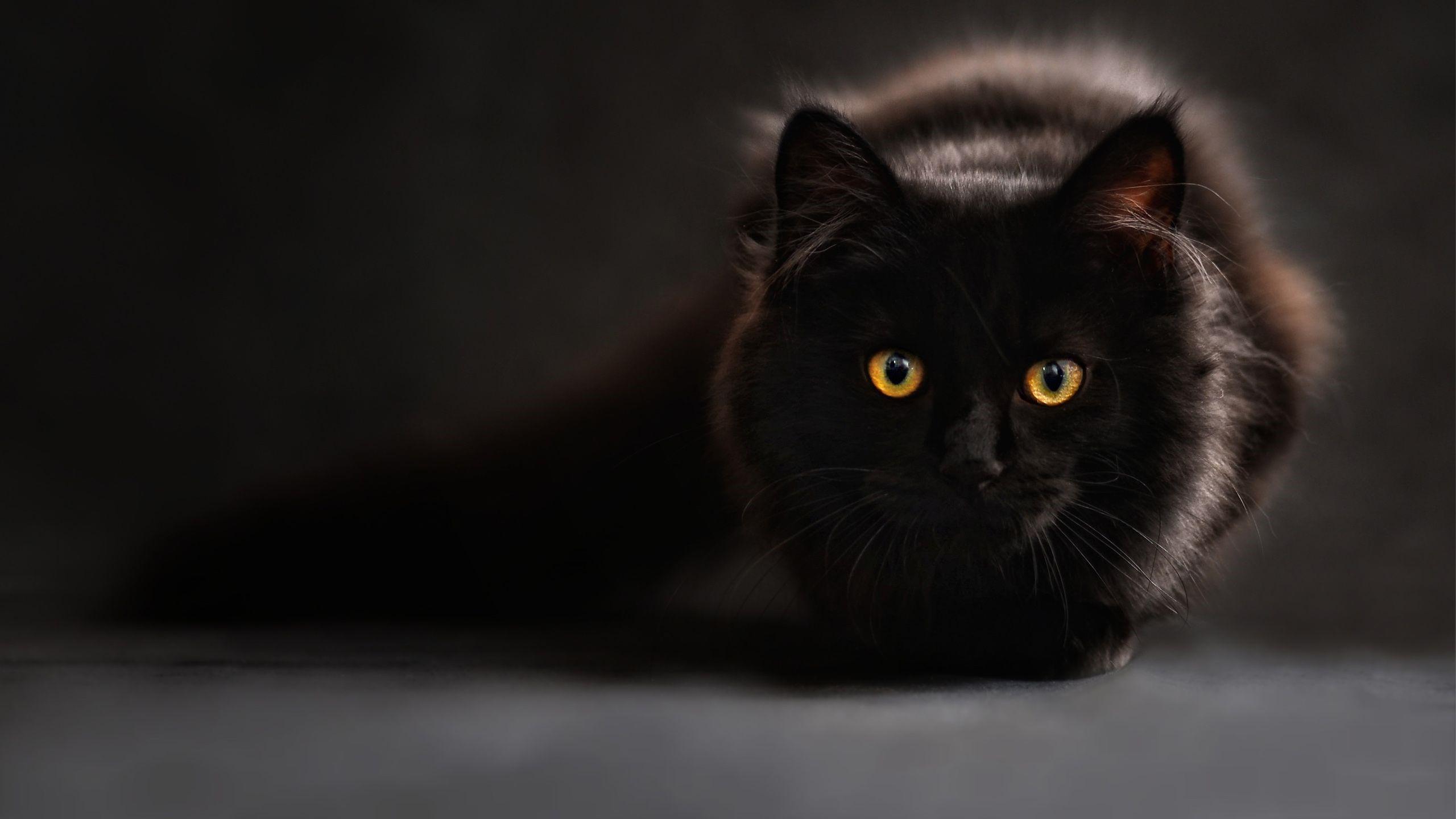 Kedi Foto