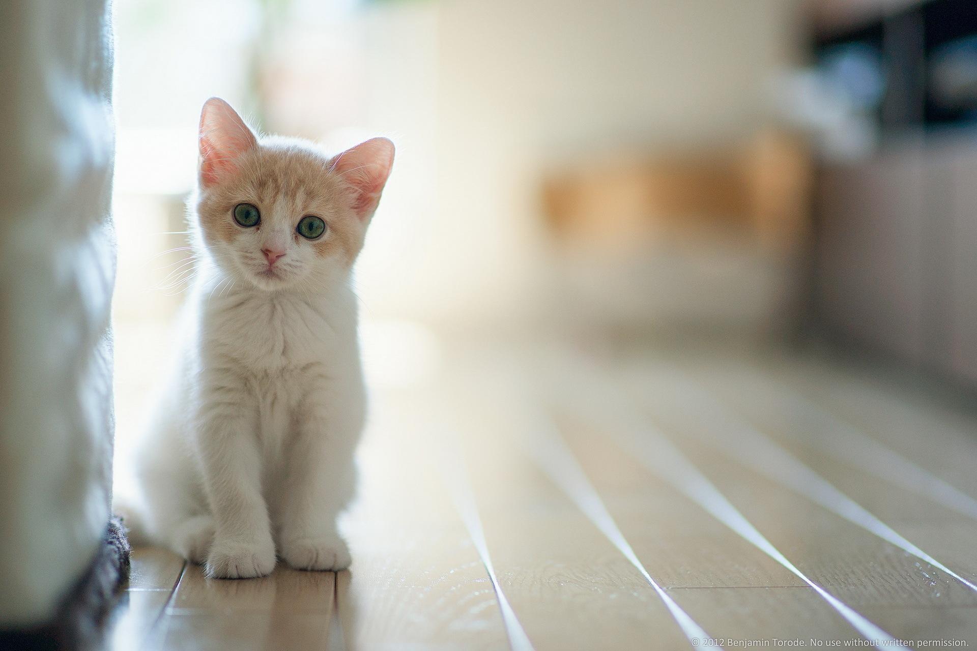 Kedi HD Fotoları