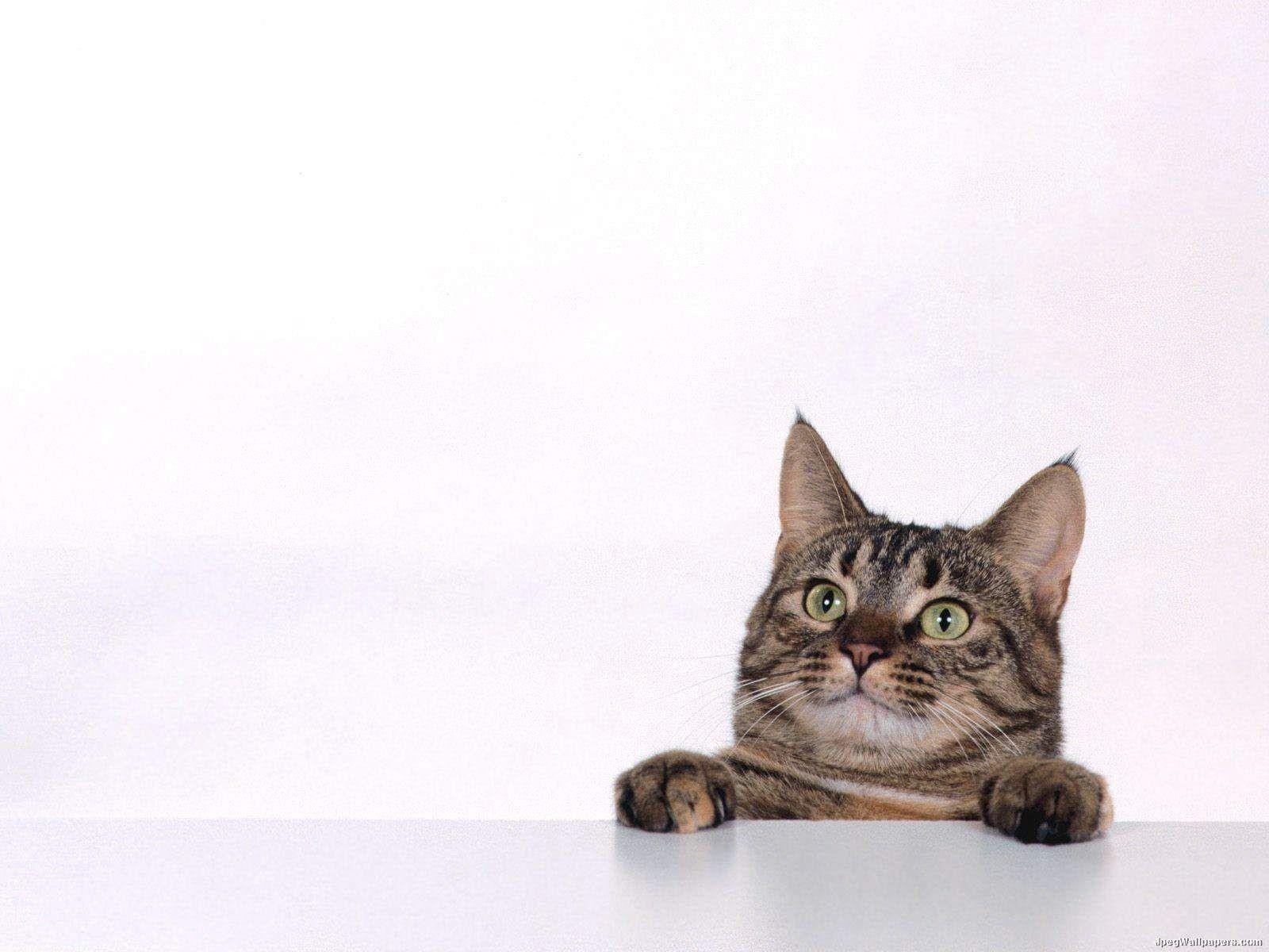 Kedi HD Resimleri