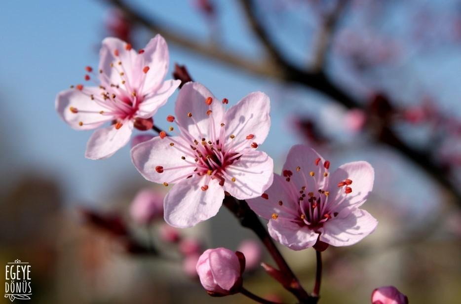 hd çiçek fotoları