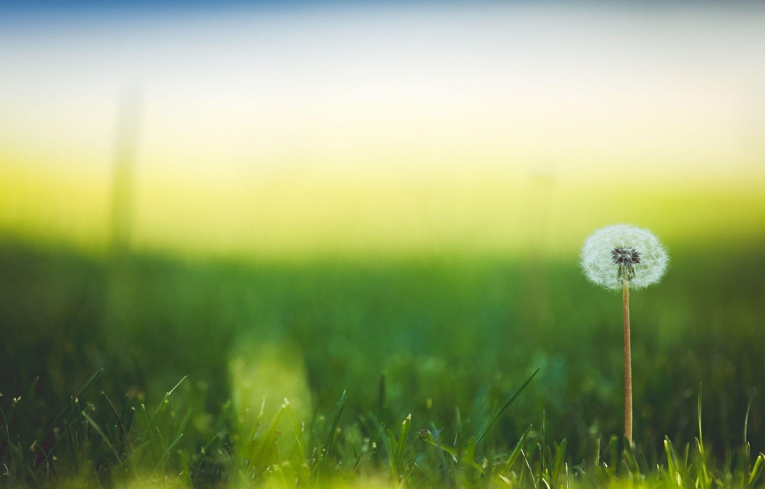 hd çiçek resimleri