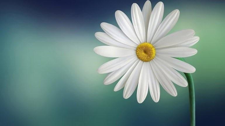 hd çiçek resmi