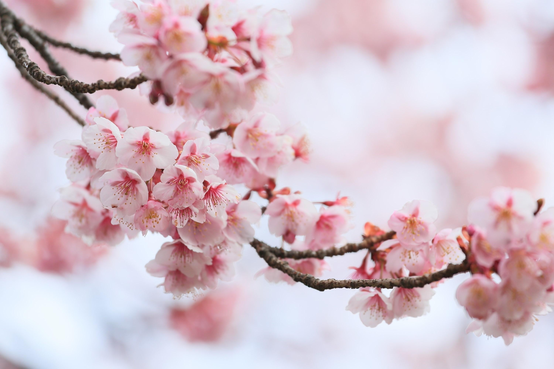 uhd çiçek resimleri