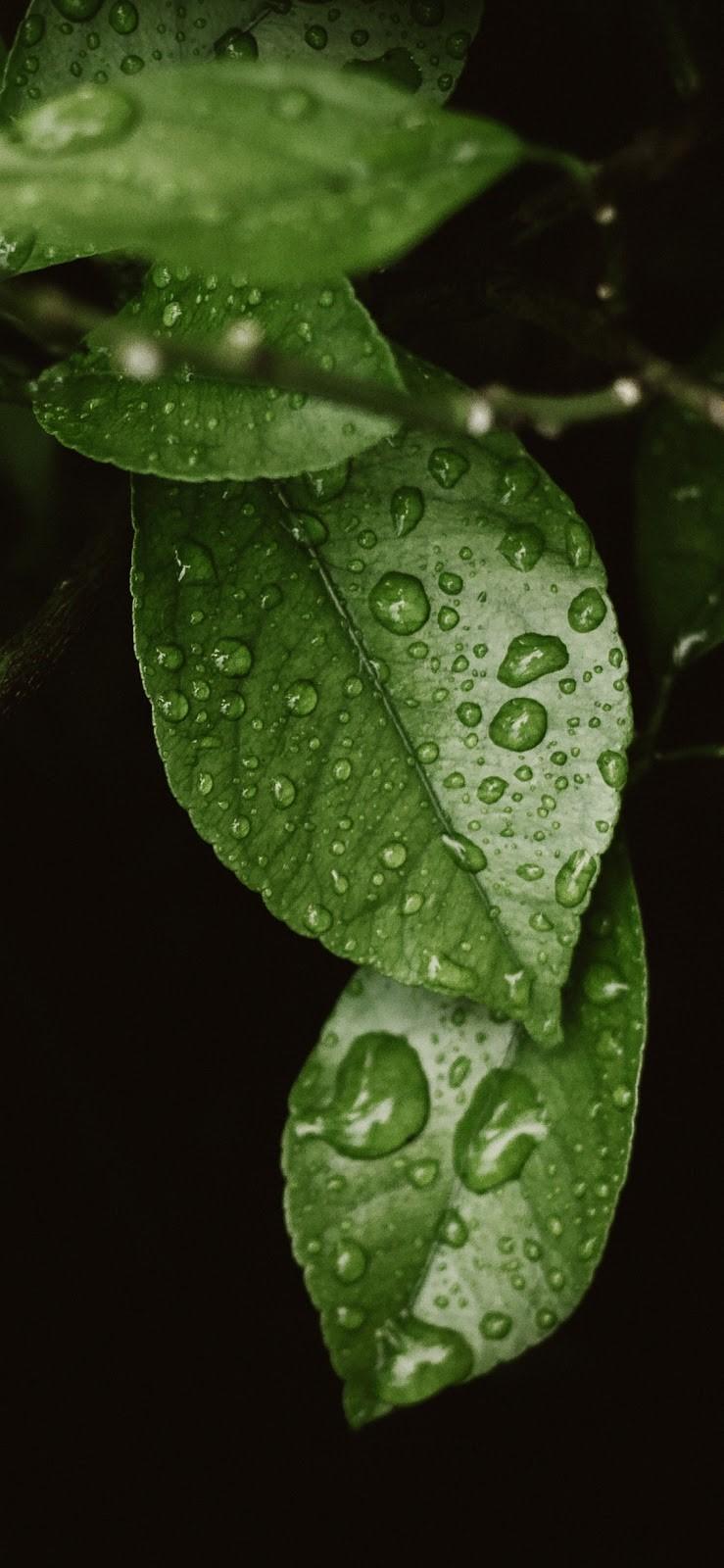 iPhone XS Max fotoları