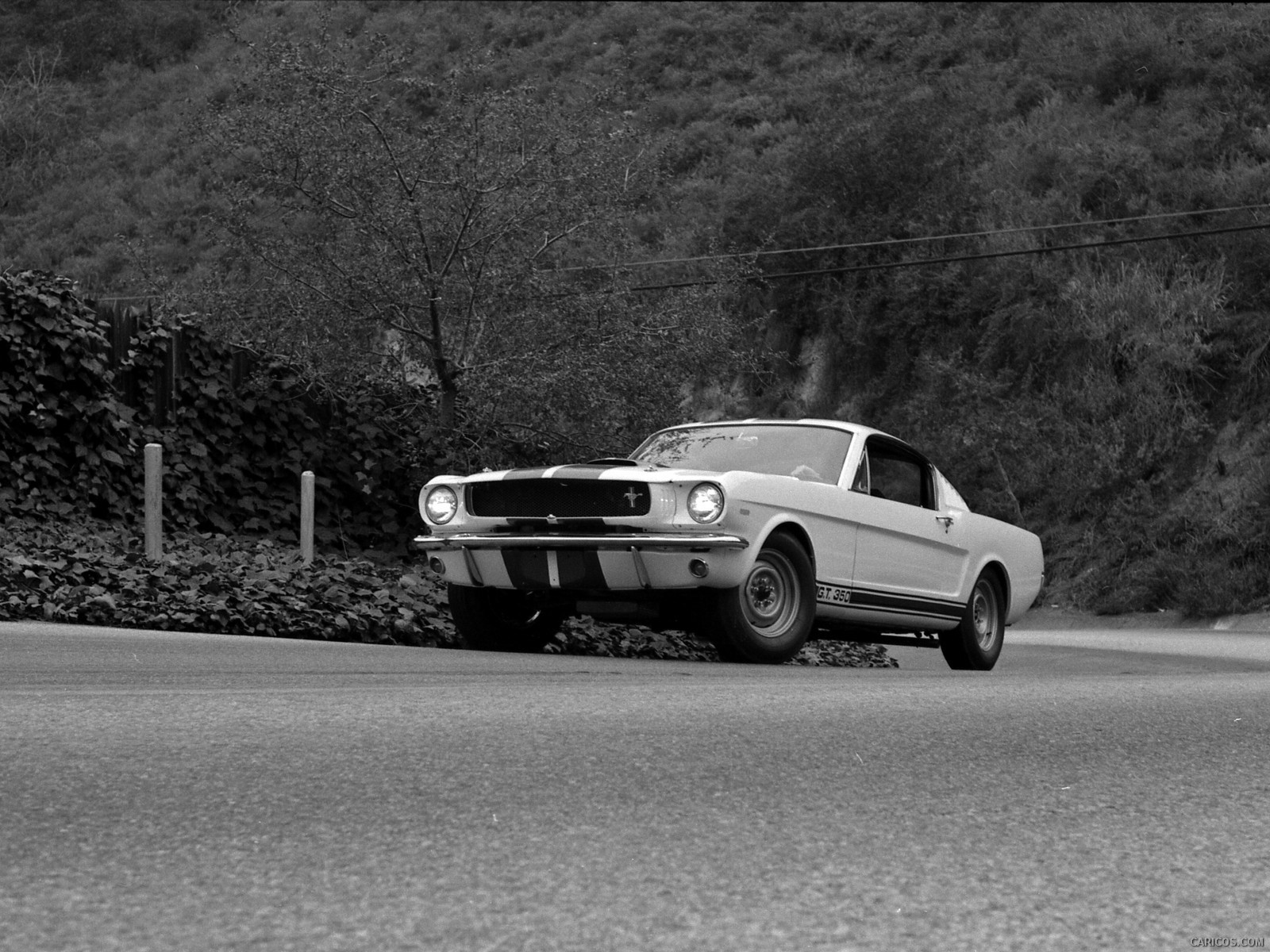 Ford Mustang Shelby GT350 fotoğraf