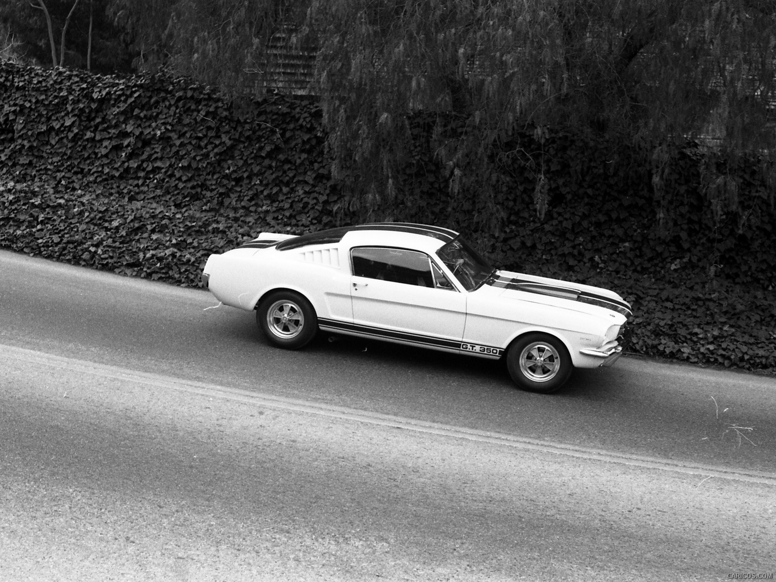 Ford Mustang Shelby GT350 photos