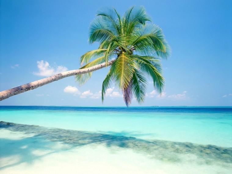 Tropikal Ada hd duvarkağıdı