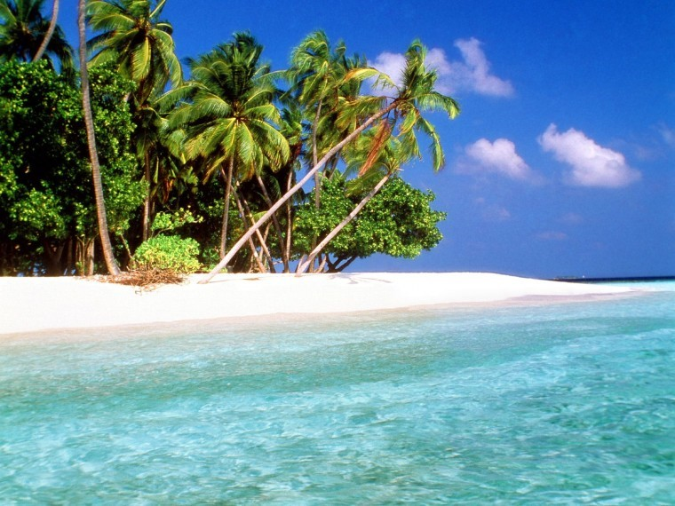 Tropikal Ada resim