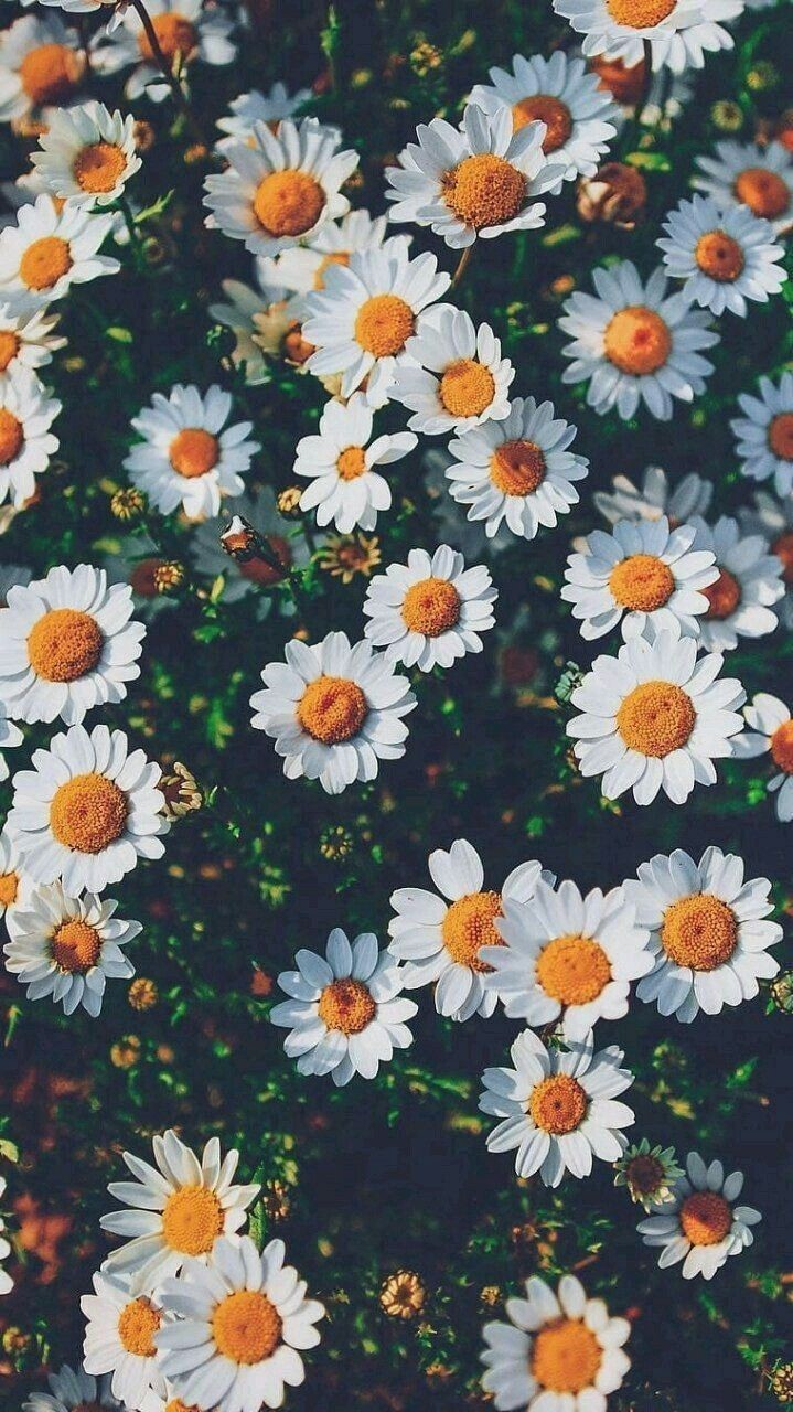 Flowers HD Mobile Wallpaper