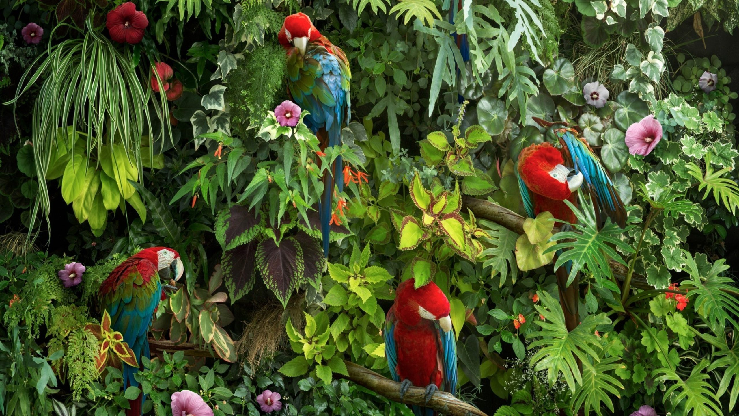 Macaw parrot HD Wallpaper scaled