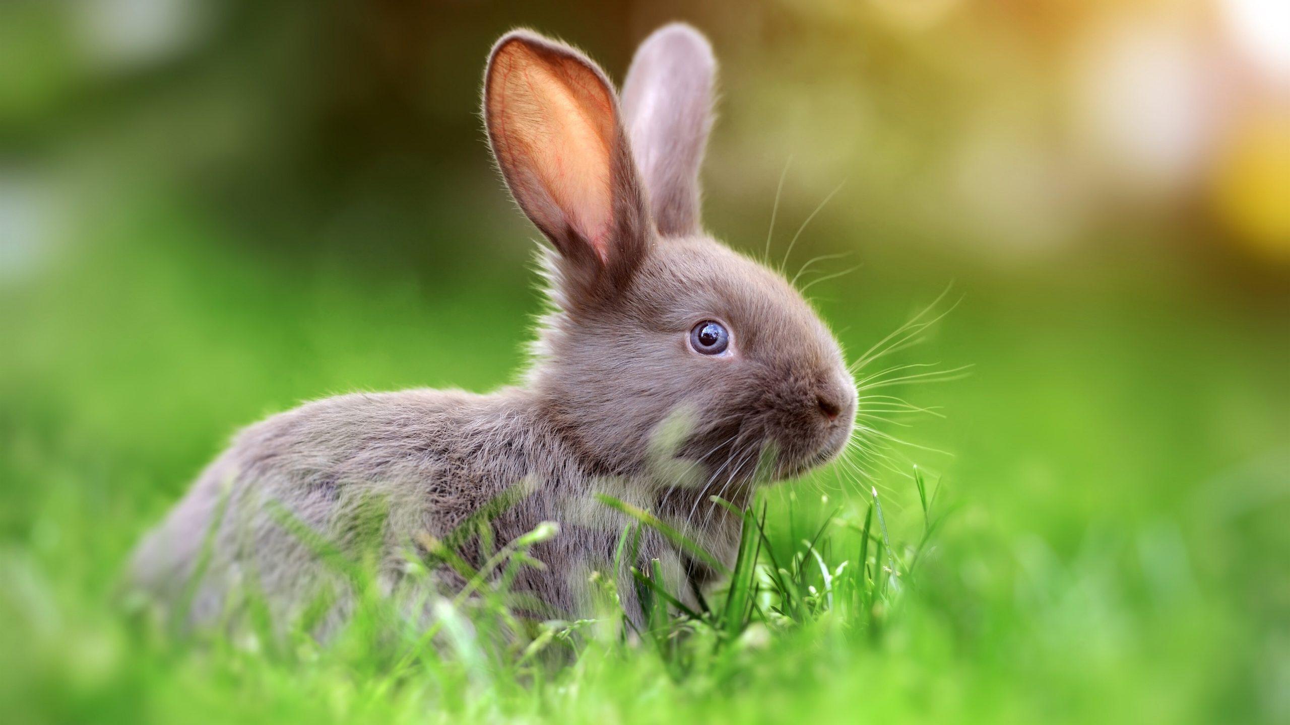 Rabbit 4K Wallpaper scaled